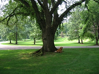 oscar-enjoy-under-tree